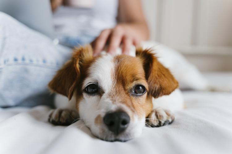 main of hese Tips Can Ensure You Are Providing Great Dog Care