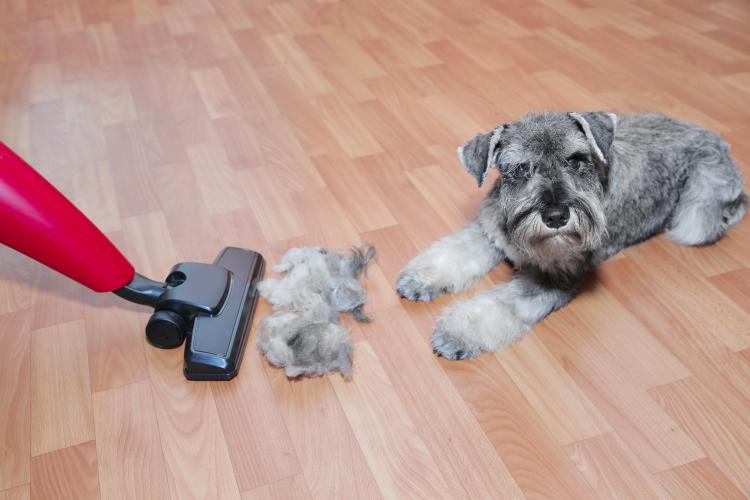 main of here's Ways To Keep Pet Hair From Getting Out of Control